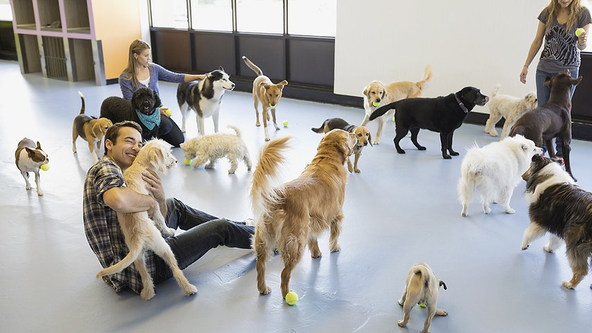 dog trainer with dogs