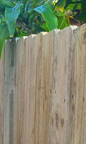 Standard Paling Fence by Best Beaches Fencing