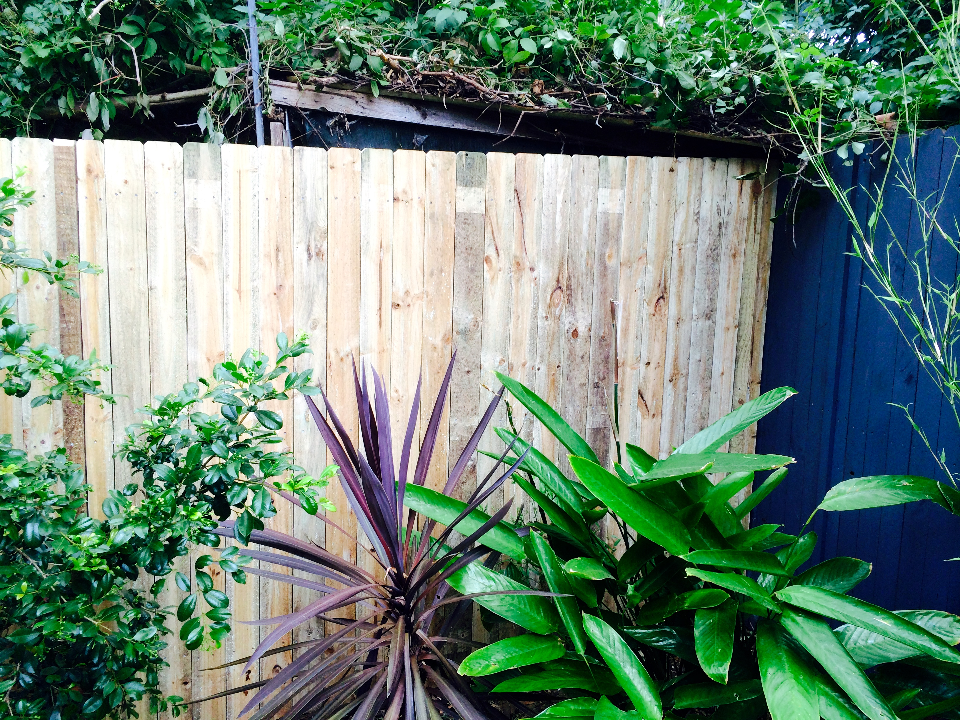 Standard Butted Treated Pine Fence