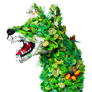 Wildflower Wolf, 2020