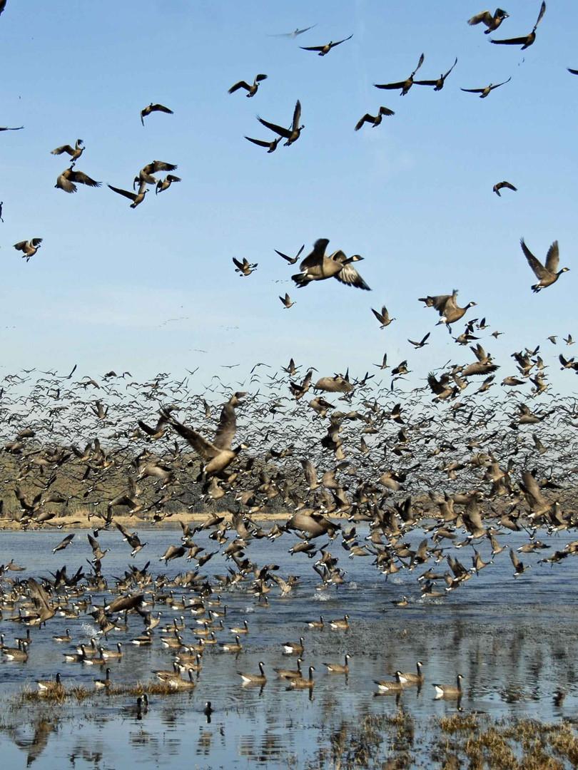 birds-in-flight-flock-of-birds.jpg