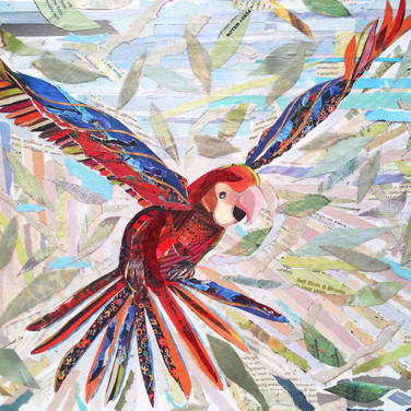 """Young Parrot"" collage by Roxana Rojas-Luzon"