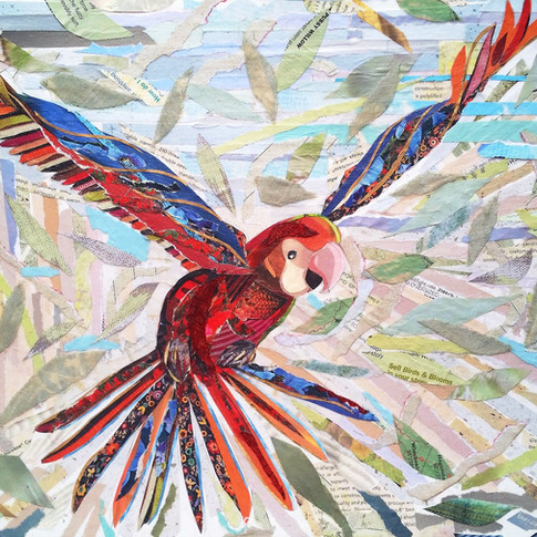 """""""Young Parrot"""" collage by Roxana Rojas-Luzon"""