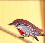 """Little Bird "" collage by Roxana Rojas-Luzon"