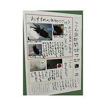 昆虫新聞.jpg