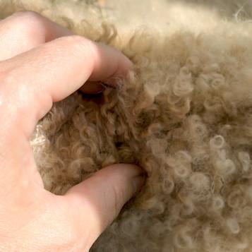 Tłumaczenie / Profile wzrostu i ich zastosowanie w kontroli rozwoju mieszków włosowych u alpak.