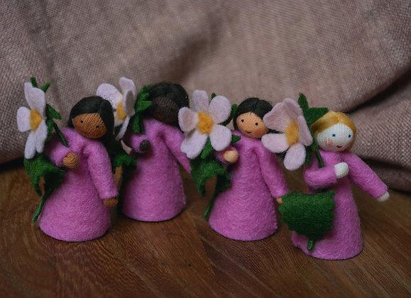Ambrosius Sweet Briar Fairies
