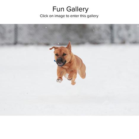 Fun Gallery.jpg