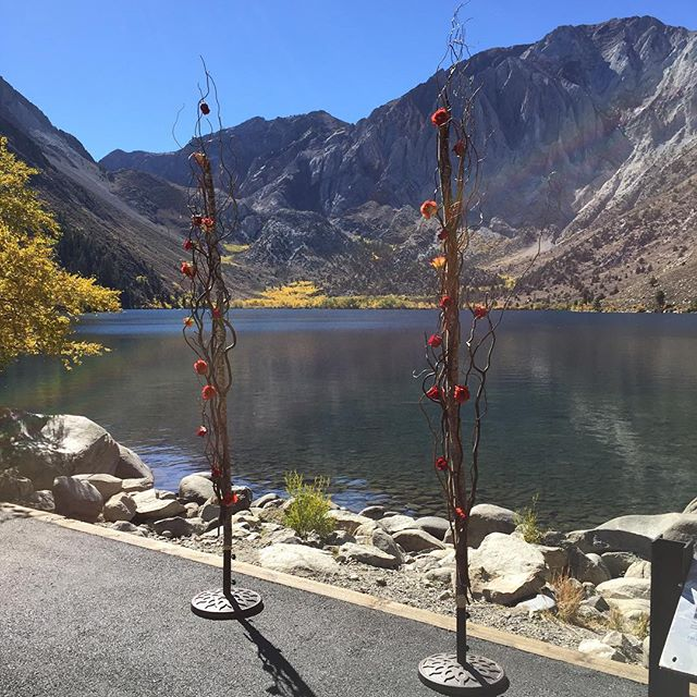 Hello fall color aspens! #mammothweddings #mammothstories #fallcolor #redlilydesign #sayido #arch #r