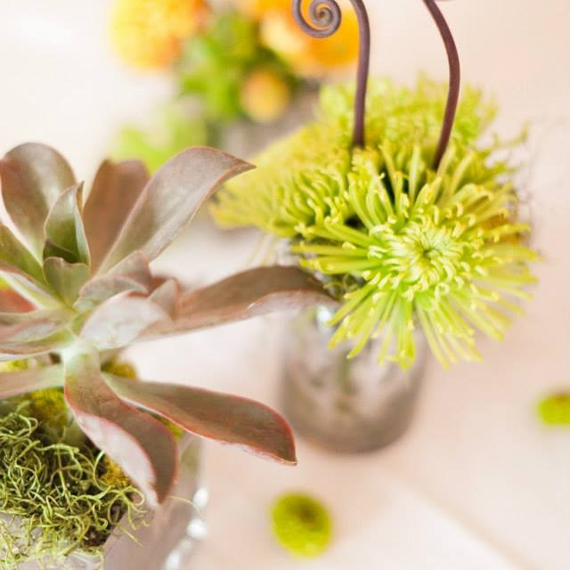 #mammothweddings #mammothstories #convictlakeresort #convictlakeresort #succulents