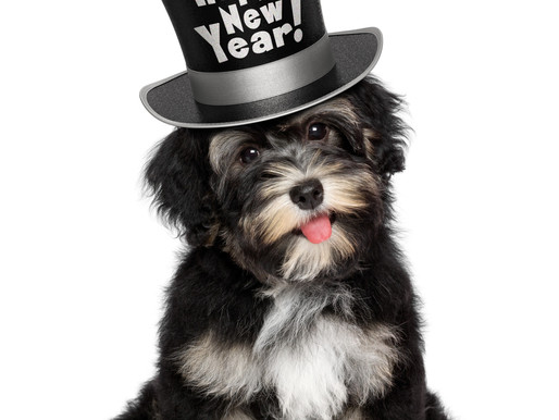 New year, new habits for you and your new (or old) dog!
