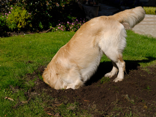 Digging for Treasure….or Boredom?