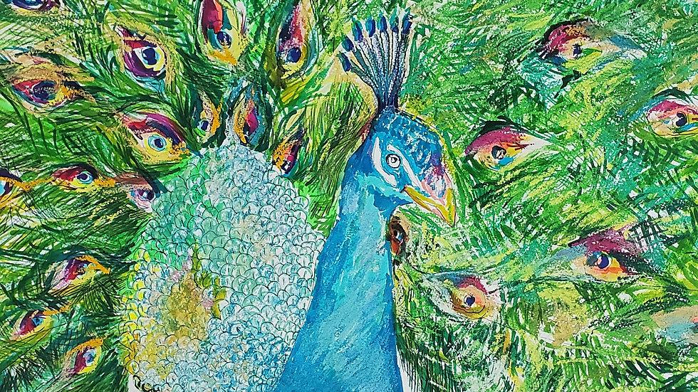 Gay Zoo- Peacock