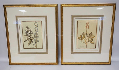 PAIR OF FRAMED AND MATTED BOTANICAL PRINTS. 18 1/4 X 22 INCH FRAMES.