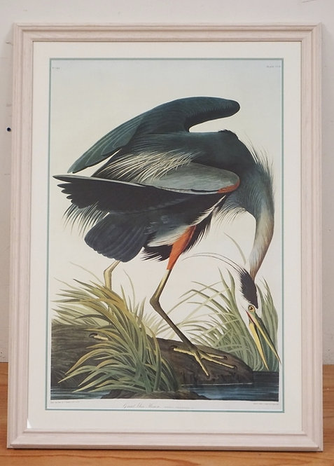 LARGE AUDUBON PRINT OF A *GREAT BLUE HERON*. ENGRAVED AND COLORED BY R. HARVELL.