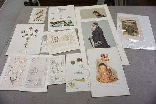 GROUP OF PRINTS AND ENGRAVINGS INCL. BOTANICAL, VANITY FAIR ETC. LARGEST 10 1/2
