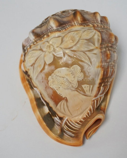 CAMEO CARVED CONCH SHELL. 5 3/4 INCHES LONG.