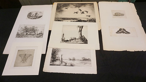 GROUP OF 8 NATURALISTIC PRINTS- LANDSCAPES, ANIMALS INSECTS, ETC. LARGEST 15 IN