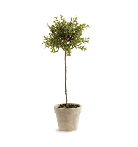 Thyme Potted Topiary