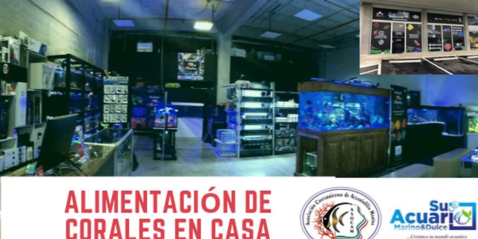 ALIMENTACIÓN DE CORALES EN CASA