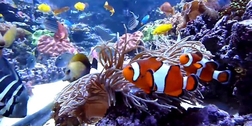 Cómo escoger los peces y errores comunes en el acuario