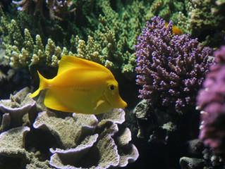 Caminando a un nuevo nivel de automatización en el acuarismo marino
