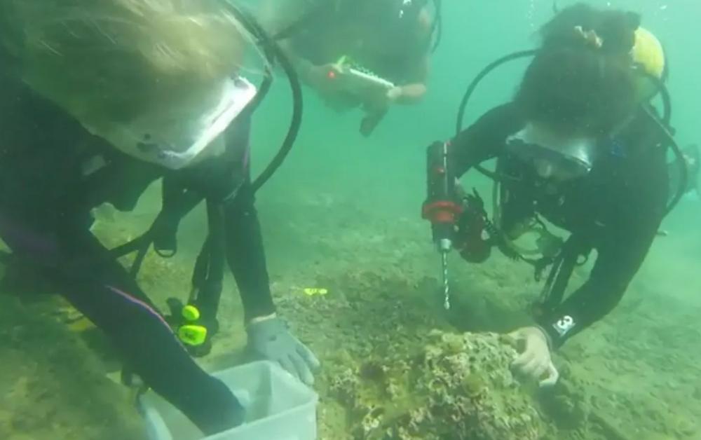 Fotografía del sitio web de Raising Coral Costa Rica