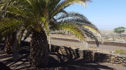 Palmgarten