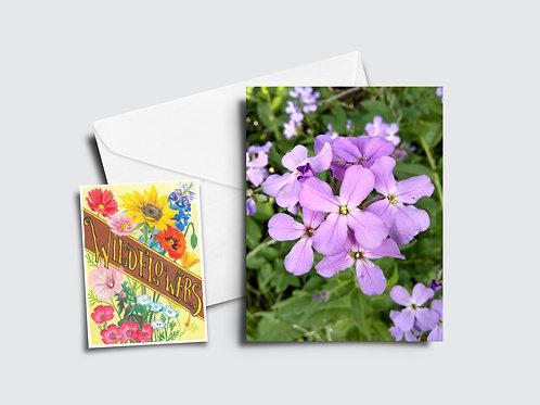 Dame's Rocket Flower Card