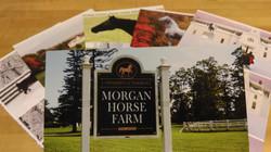 Morgan_horse