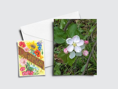 Apple Blossom Flower Card