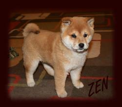 Zen4+copy