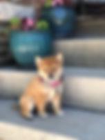 Pixie - Foxy 5-28-2020.jpeg