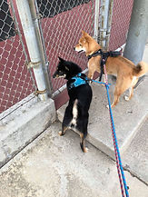 Coco and Toby 2-27-2019.jpg