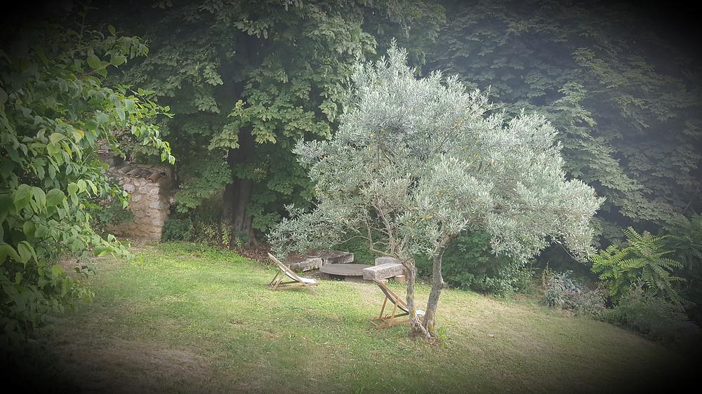 oliviers et chaises longues au Monastère