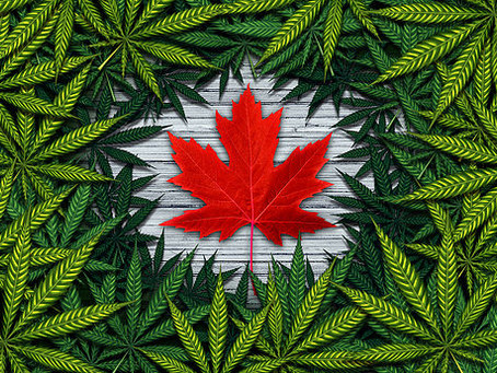 Canada Legalizes Recreational Cannabis. What You Need to Know