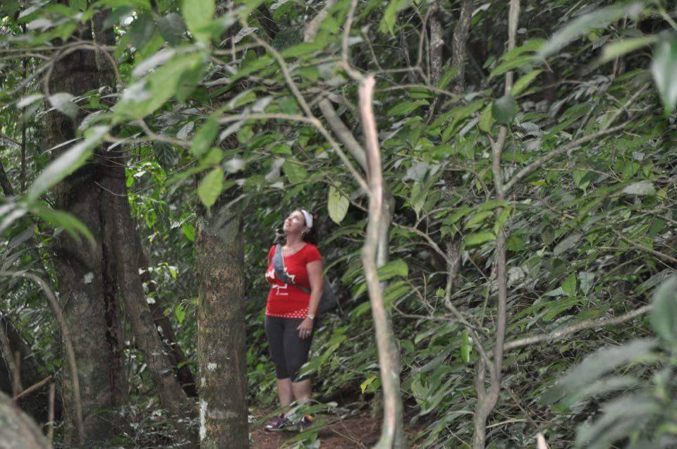 heliconias rainforest