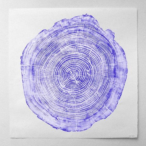 Cedar Wood Print 47 x 47 inches- Blue Ink (Framed)