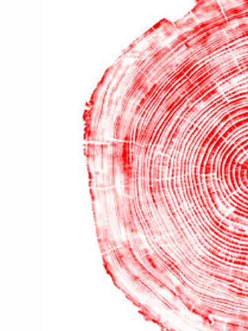 "Half Cedar Right Side - 19"" x 27"" inches"
