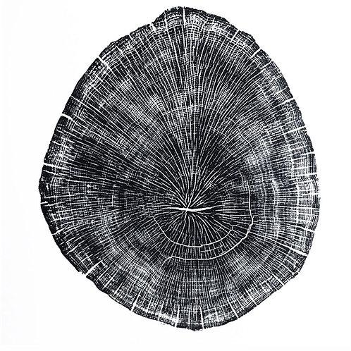 "Oak Tree Print -24 1/2"" x 27 1/4"" inches"