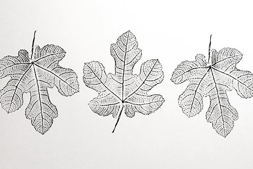 "Five Fig Leaves - 14 1/2"" x 37"" inches"