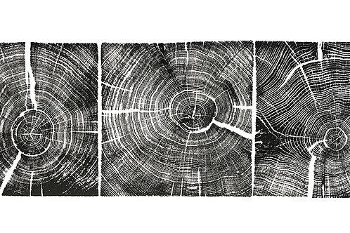 Trois Carrés de Chêne (Three Squares of Oak)