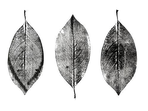 """Three Magnolia Leaves - 16 1/2"""" x 11 1/2"""""""