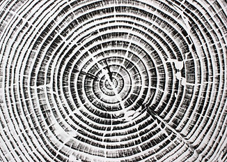 Wood Print Tree Rings
