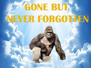 In Memoriam: He was an Austere Gorilla