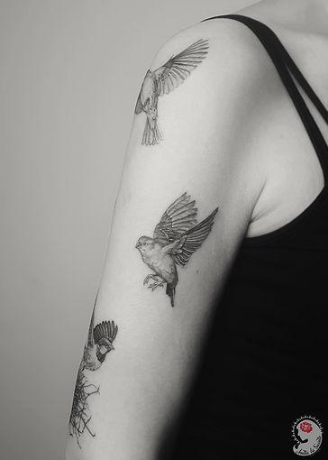 birds_2.jpg