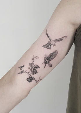 birds_andrew.jpg