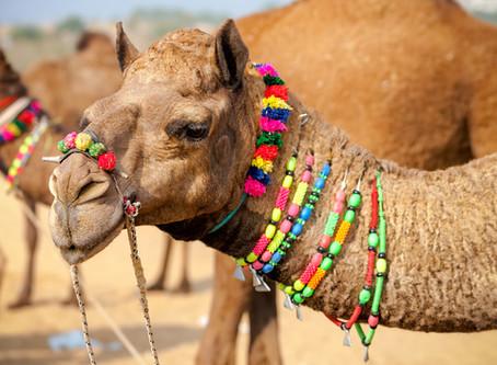 Camels, Botox and Tucker Carlson