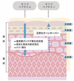 ヒト幹細胞 pop3.png