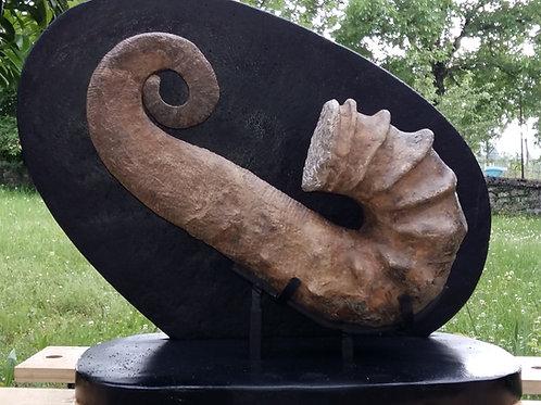Ammonite Andouliceras sp.  Maroc